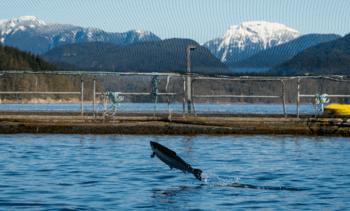 UN presents state-of-aquaculture reviews