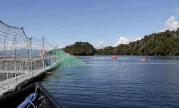 Subpesca define quiénes podrán certificar estructuras de cultivo de salmón