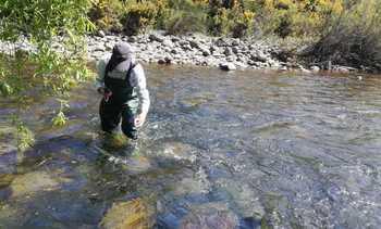 Los avances de la investigación de la SMA a piscicultura de Cermaq Chile