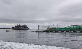 El proyecto que entregará nuevos conocimientos productivos sobre salmón coho chileno