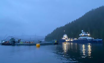Cermaq and Mowi get state technology handouts