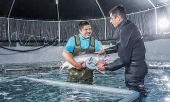Hendrix: No es efectivo que salmonicultura en agua dulce tiene mínima regulación