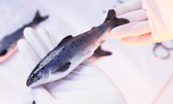 SuperSmolt maker plays down significance of BioMar court ruling