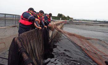 Comunicación bidireccional: Una mirada sindical a la salmonicultura