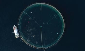 Desarrollan tecnología hidroacústica que detecta momento exacto para alimentar salmones