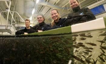 Rekordproduksjon av torskeyngel hos Havlandet Marin Yngel