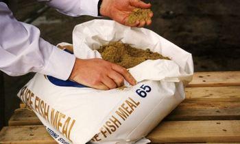 Producción mundial de harina de pescado aumentó 11% en 2020