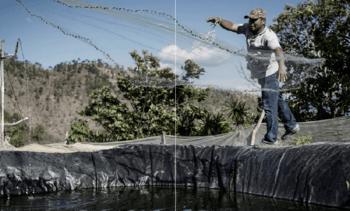 Cultivo de truchaaumenta participación en PBI de Perú