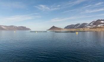 Arctic Fish går på børsen i dag