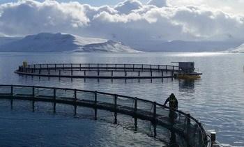 Icelandic Salmon buys hatcheries as it eyes 7,000t volume increase