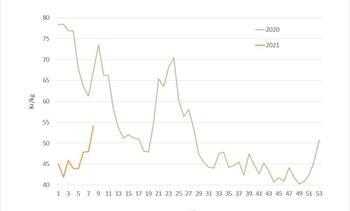 Salmon price lifts by NOK 6.21 per kilo