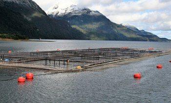 Nuevas salmonicultoras certifican gestión de emisiones de carbono con HuellaChile