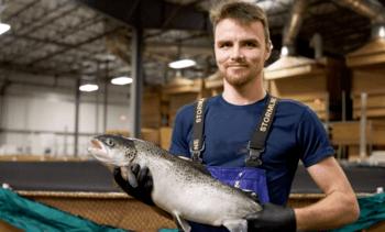 AquaBounty obligada a adelantar cosechas de su salmón convencional