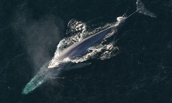 Plan Nacional Oceanográfico incorpora impactos del ruido submarino