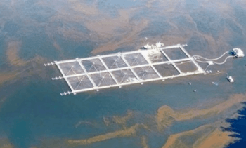 Chilean doctors prescribe salmon farming curbs