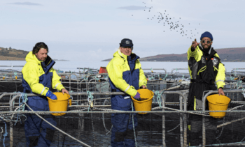 UK's top chefs back 'best in the world' Scottish salmon
