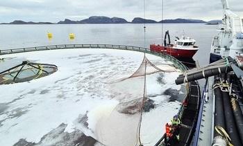 Realizan tercer ingreso de peces en jaulas sumergibles de Atlantis