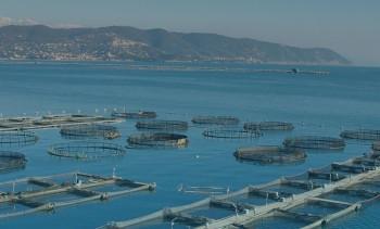E-learning bid to improve aquaculture efficiency