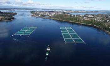 Cargill reconoce resultados obtenidos por dos empresas para salmón coho