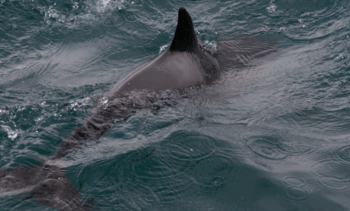 Scientists sound warning over next-gen seal scarers