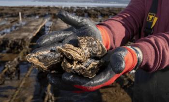 Scottish shellfish production fell last year