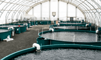Steelhead farm owner highlights RAS efficiencies