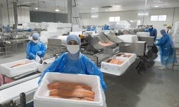 Gremio refuerza sitio web educativo para acercar la salmonicultura a las personas