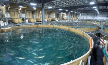 AquaBounty posts $9.4m half-year loss but starts bringing in revenue