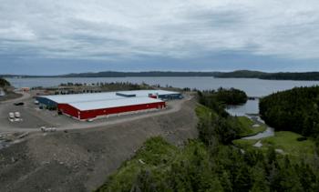 Salmonicultora elimina 1 millón de peces por precaución ante ISAV