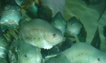 Cleaner fish course to address training gap