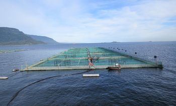 Instalan nueva boya por programa de monitoreo ambiental a barrios de salmón