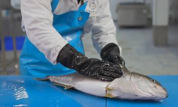Kingfish Co chooses Optimar for processing solution