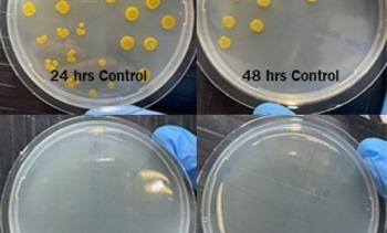 Cermaq tester V2 nøter og luseskjørt mot bakterielle patogener