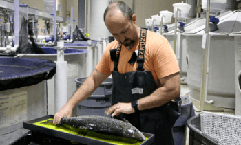 Cargill extends partnership to develop RAS salmon feed