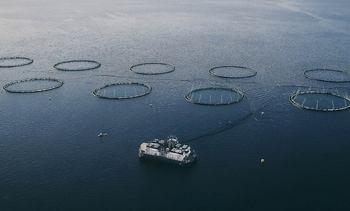 - Året var preget av utfordringer i matfiskproduksjonen