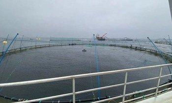Dykkerulykke ved oppdrettsanlegg - to personer sendt til sykehus