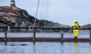 - Fortsatt utfordringer med fiskehelse