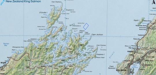 NZ King Salmon makes social media appeal for open ocean farm support