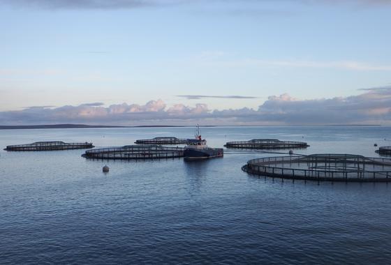 Salmon farmer worth £100m to Scottish suppliers