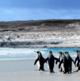 Falklands to study potential for aquaculture