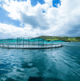 Zooming in on Ireland's aquatech expertise