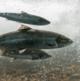 Analistas observan mayor actividad de fusiones y adquisiciones en salmonicultura