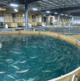 AquaBounty commits to ESG reporting